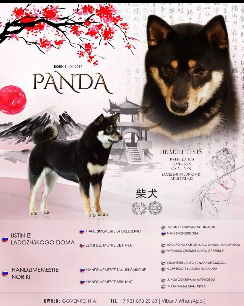 СПб, 1 девочка и 3 мальчика от JUTUSH JASAMAN OINARU и PANDA  Panda_11