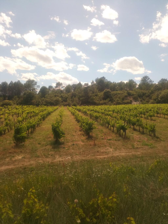 Besoin de conseils sur des vignes non entretenues Img_2021
