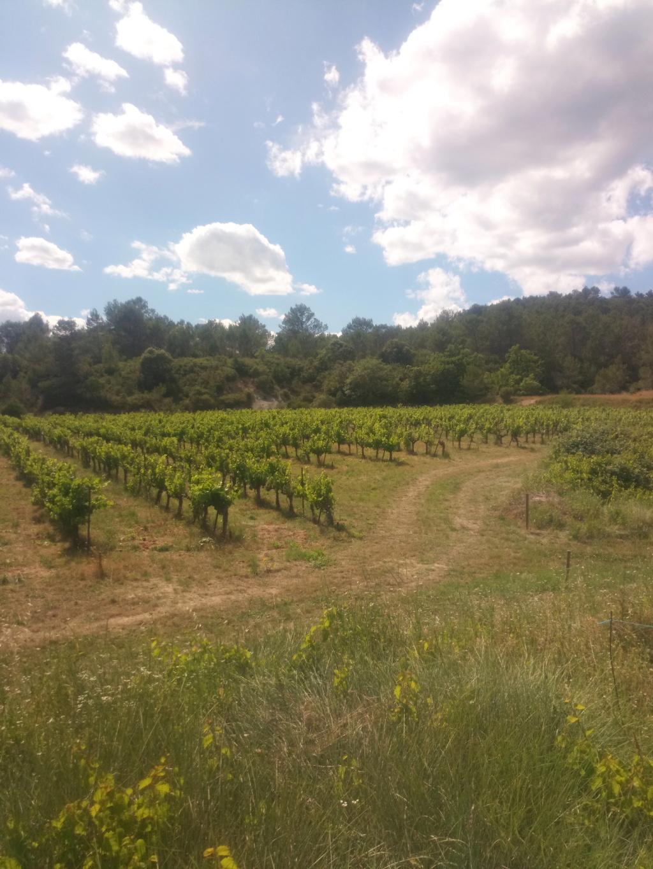Besoin de conseils sur des vignes non entretenues Img_2022