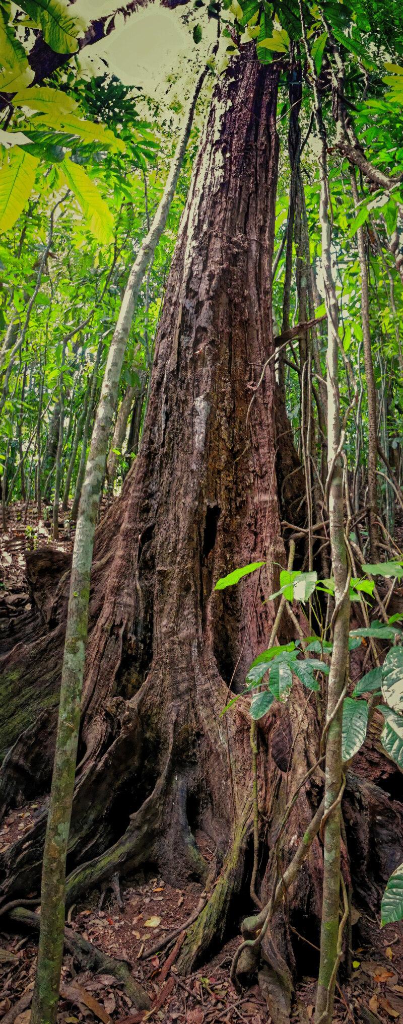Dans la forêt vierge... P1020211