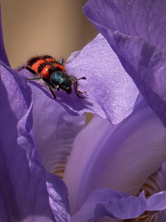 Exploration dans la vallée des iris... + recadrages... P1520911
