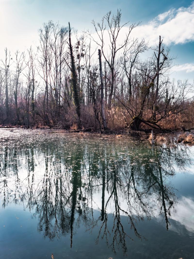Reflets dans la forêt du Rhin... P1650010
