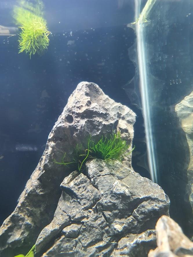 Présentation de mon aquarium de 30 l 20200710