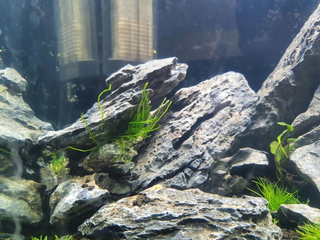 Présentation de mon aquarium de 30 l 20200711