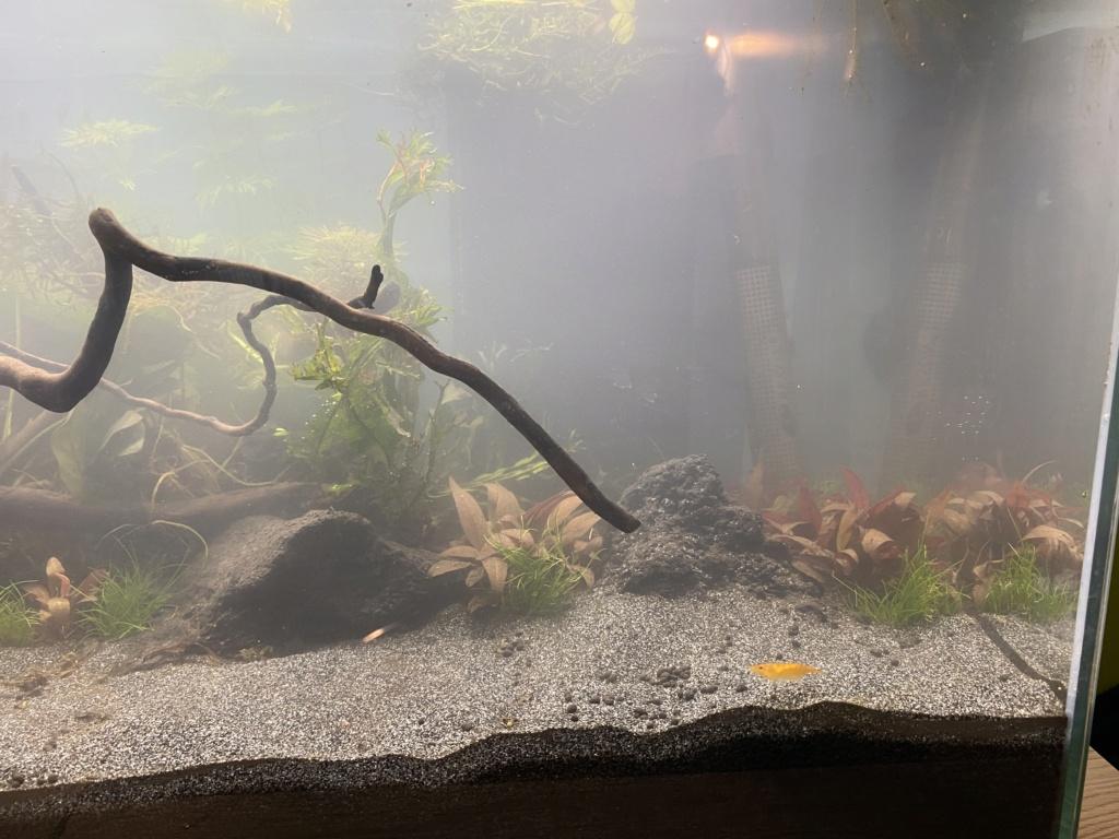 Débutant - Premier aquarium - Page 8 00d0be10