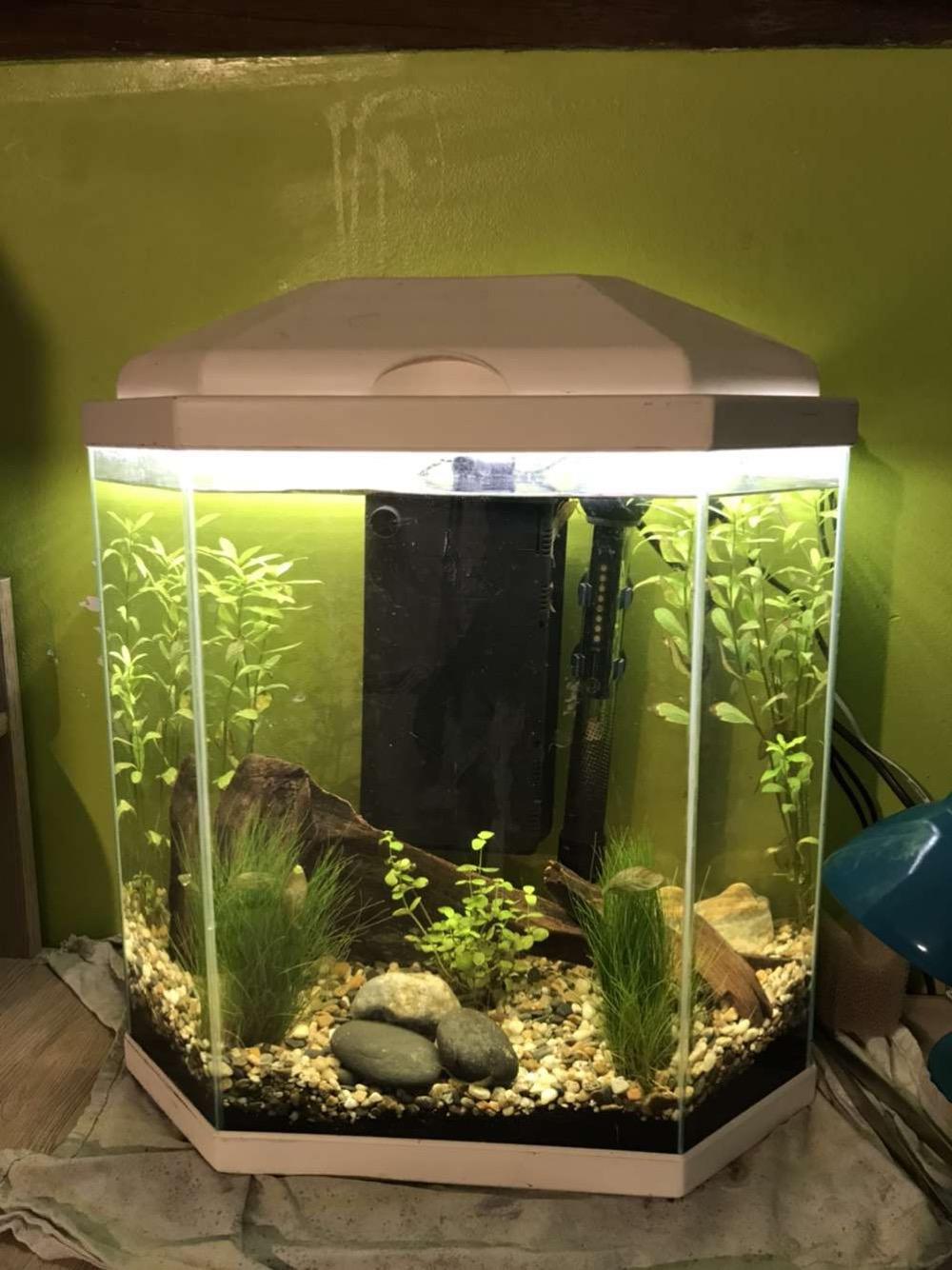 Débutant - Premier aquarium 3722bf10