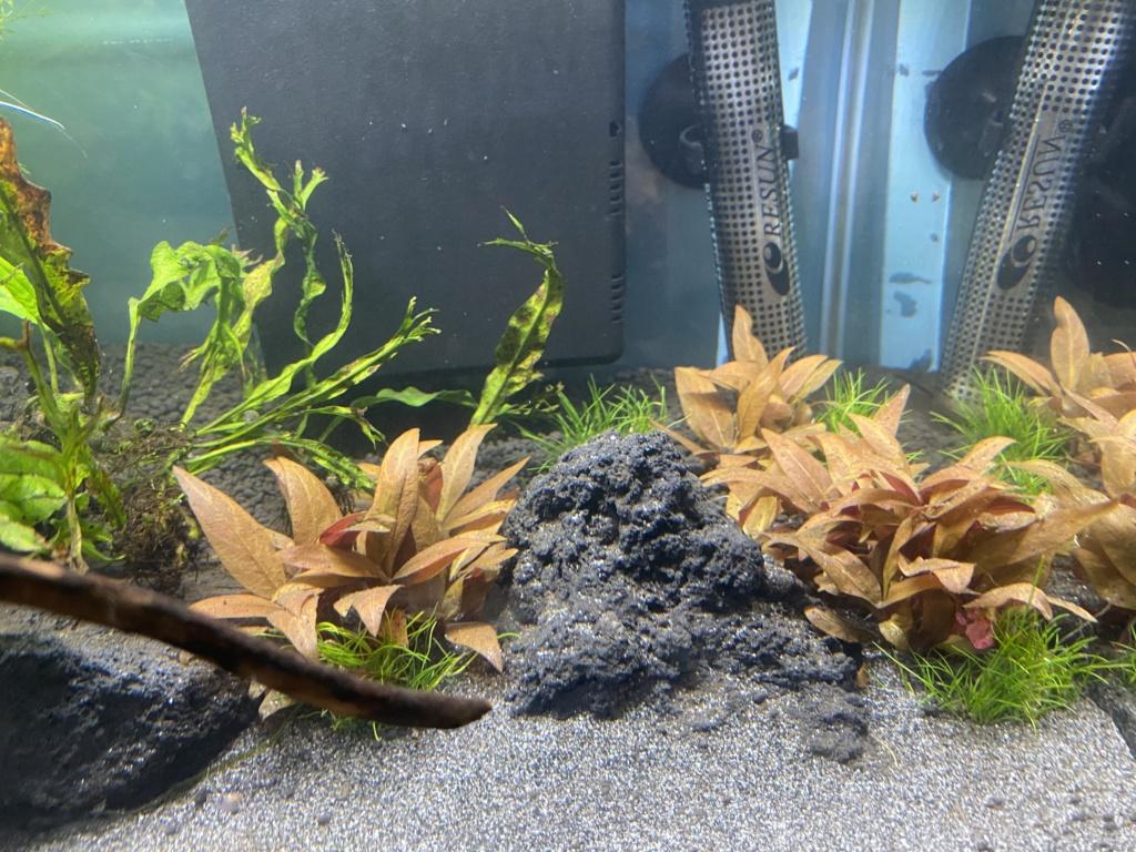 Débutant - Premier aquarium - Page 8 53ba9010