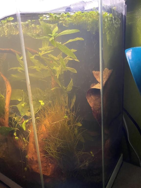 Débutant - Premier aquarium - Page 2 55cefc10