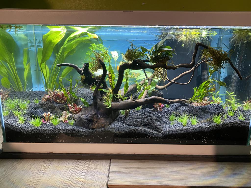 Débutant - Premier aquarium - Page 8 69f6ba10