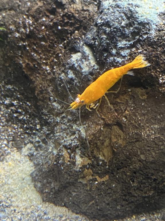 Débutant - Premier aquarium - Page 9 7236f910