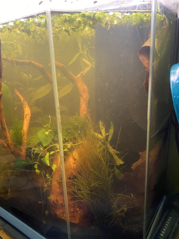Débutant - Premier aquarium - Page 2 777c4410