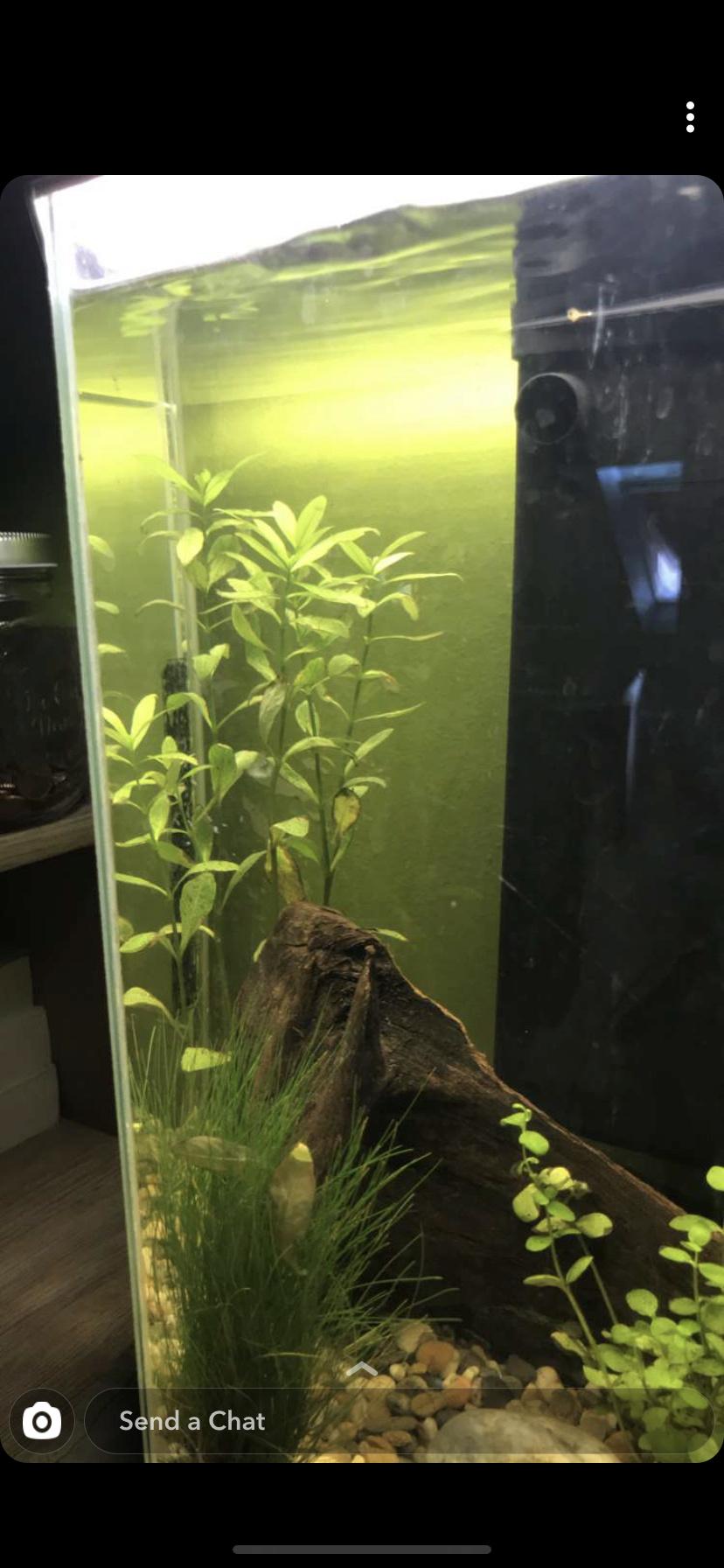 Débutant - Premier aquarium 79863410