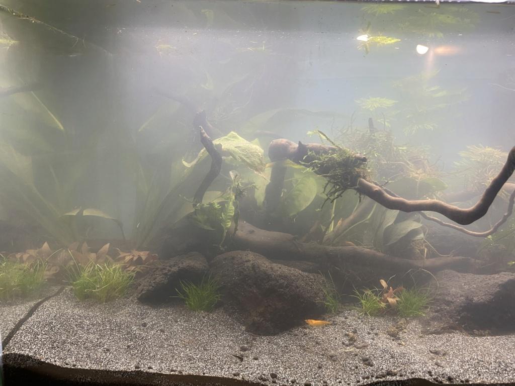 Débutant - Premier aquarium - Page 8 7e70eb10