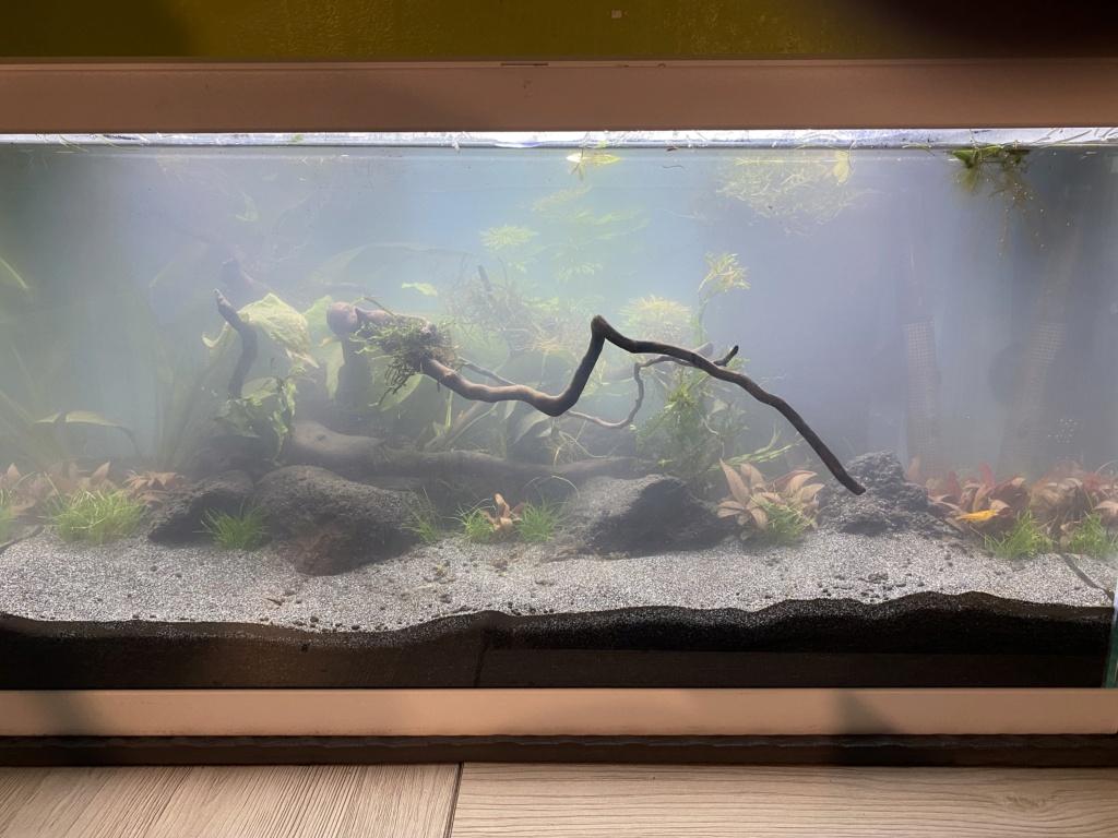 Débutant - Premier aquarium - Page 8 A2287a10