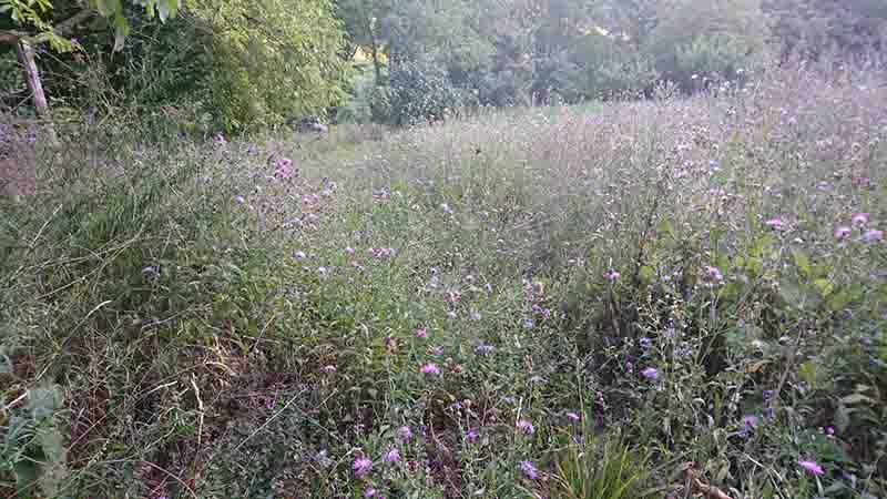 Consiglio aree alberi/rovi/erba alta - Stihl fr235 Dsc_0111