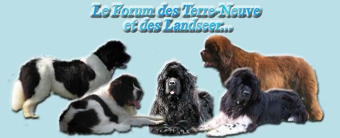 Le forum des Terre-neuve et des Landseer