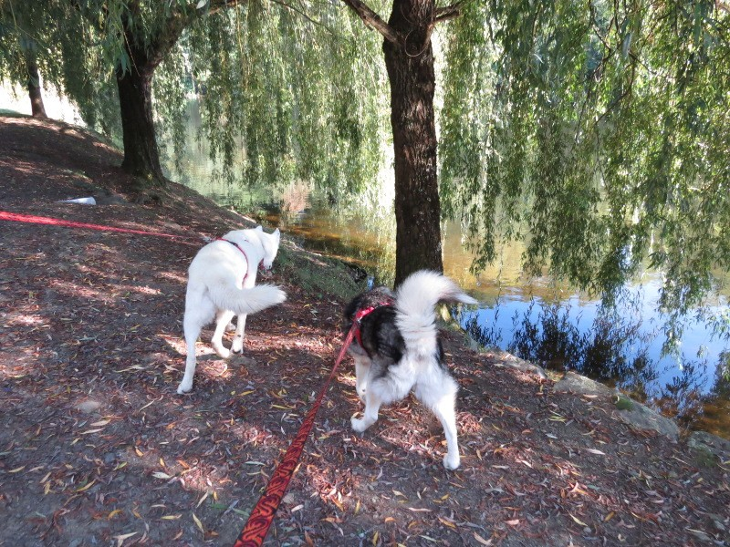Chadka et Yocco au fil de la Dordogne 03_yoc11