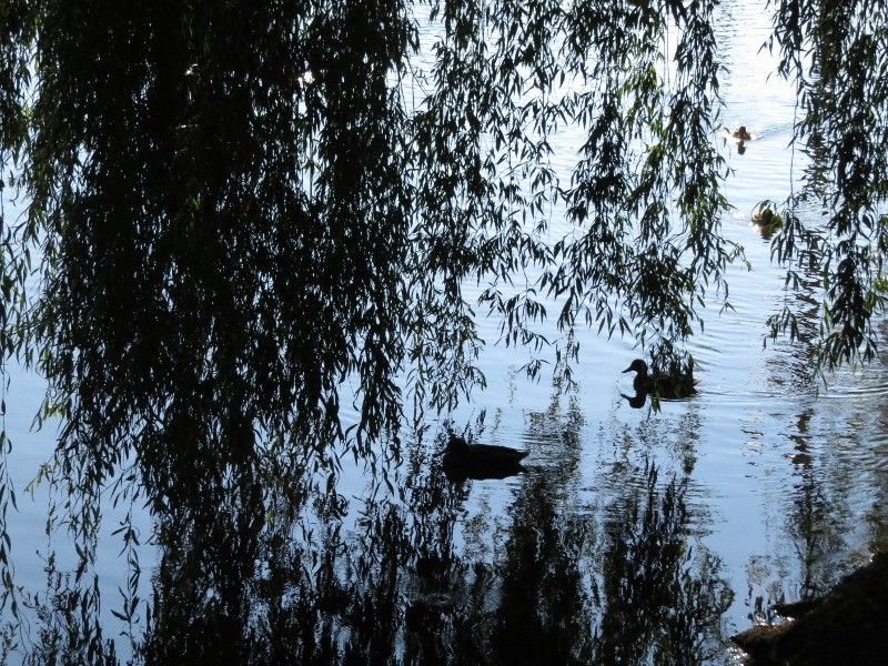 Chadka et Yocco au fil de la Dordogne 04_can10
