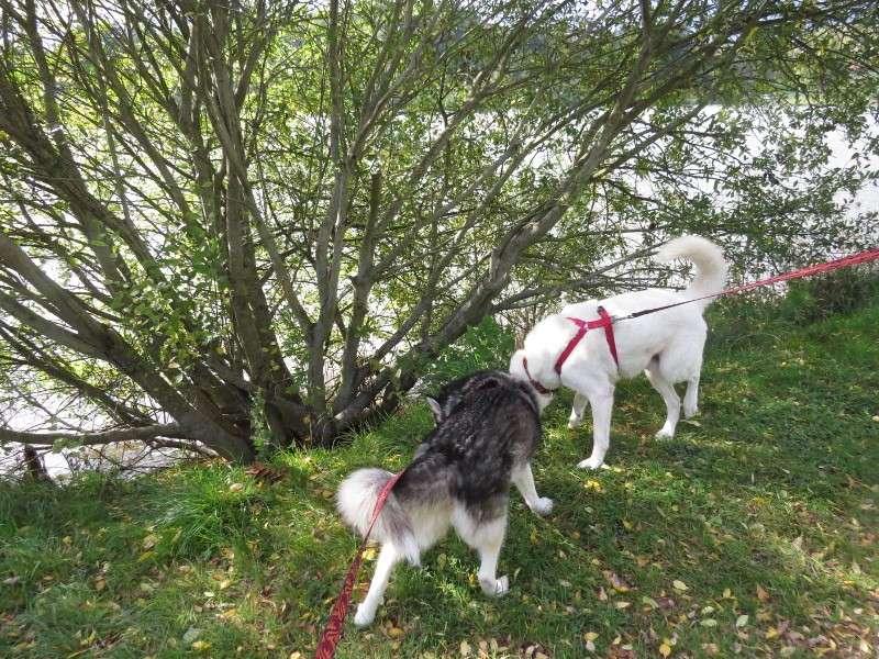 Chadka et Yocco au Lac de La Cassière 05_cha12