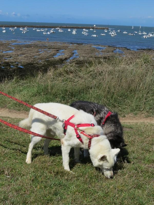 Chadka et Yocco en Bretagne 06_poi10