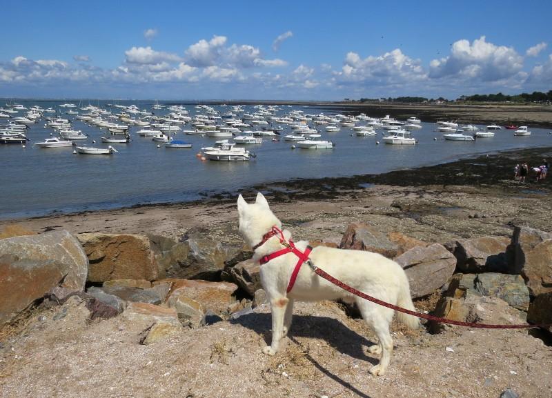 Chadka et Yocco en Bretagne 07_poi10