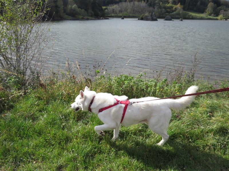Chadka et Yocco au Lac de La Cassière 09_yoc14