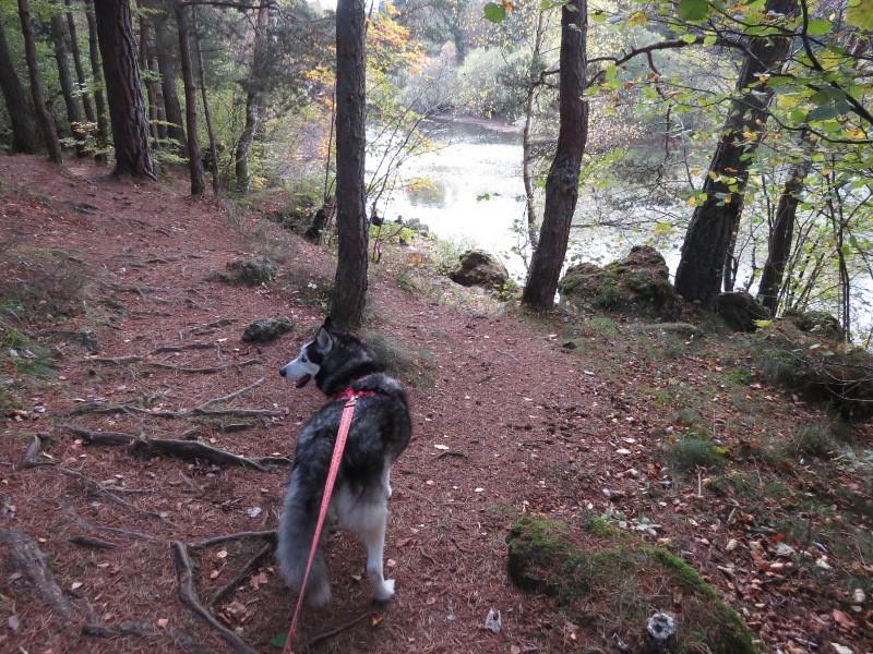 Chadka et Yocco au Lac de La Cassière 14_cha10