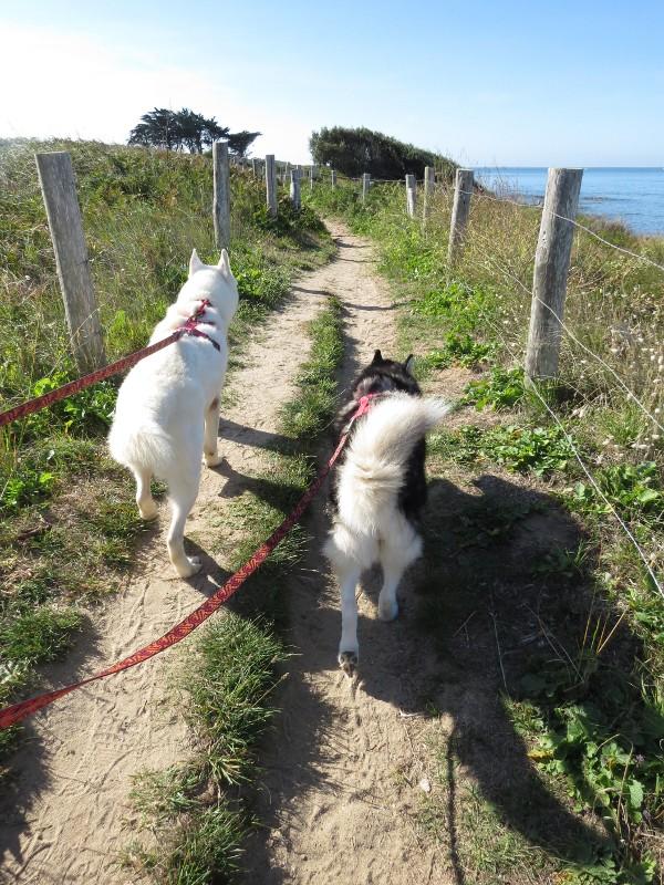 Chadka et Yocco en Bretagne 15_yoc10