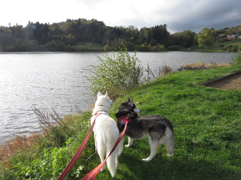Chadka et Yocco au Lac de La Cassière 17_yoc11