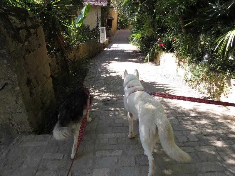 Chadka et Yocco au fil de la Dordogne 36_cha10