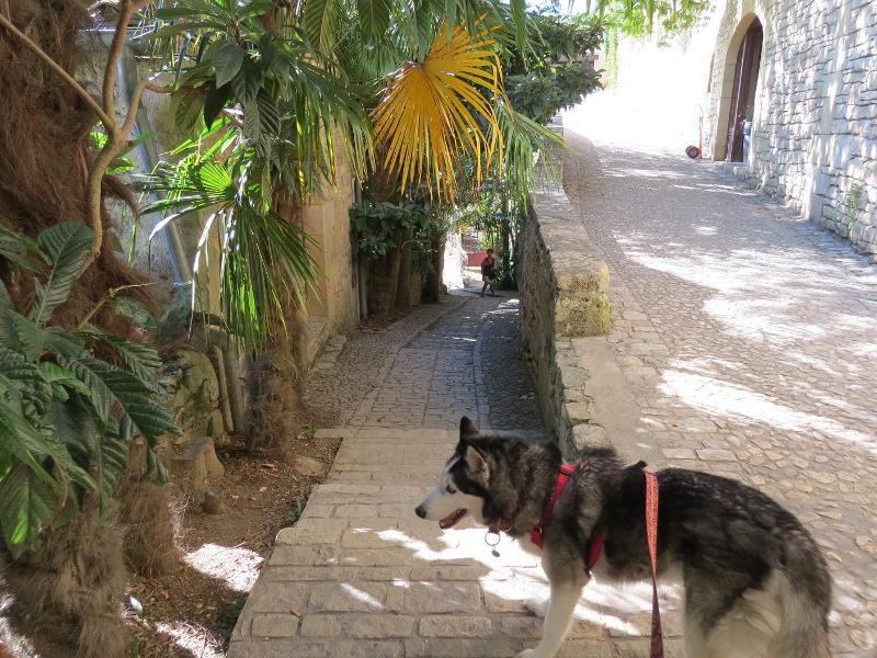 Chadka et Yocco au fil de la Dordogne 38_cha10