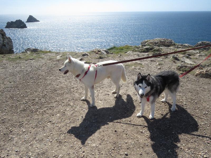Chadka et Yocco en Bretagne 40_yoc10