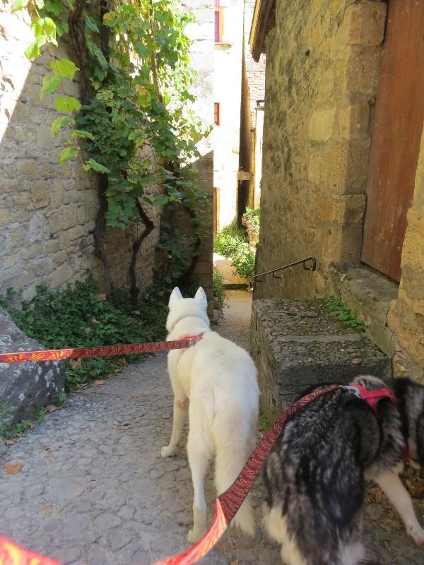 Chadka et Yocco au fil de la Dordogne 45_yoc10