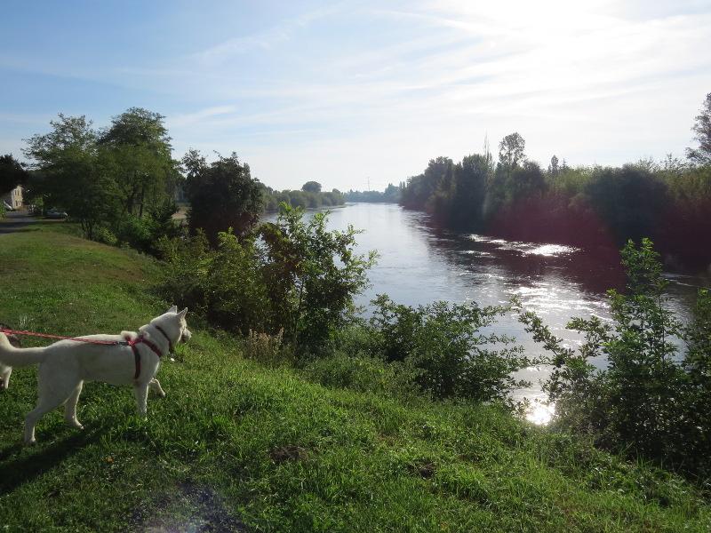 Chadka et Yocco au fil de la Dordogne 63_yoc10