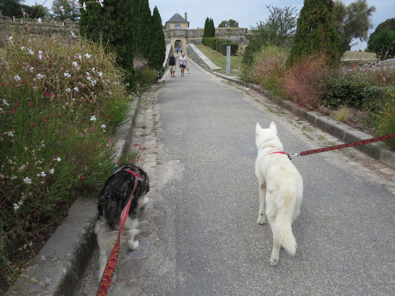 Chadka et Yocco au fil de la Dordogne 68_cha11