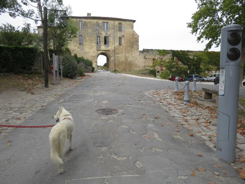 Chadka et Yocco au fil de la Dordogne 73_yoc10