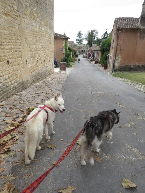 Chadka et Yocco au fil de la Dordogne 74_yoc10