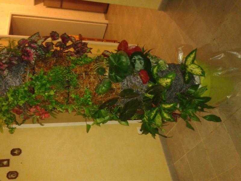 cadre végétal 2013-018