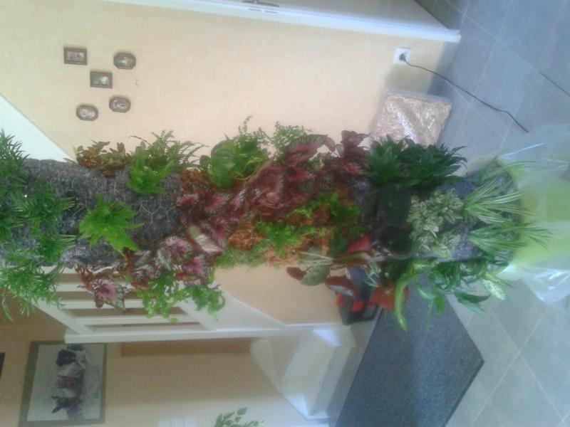 cadre végétal 2013-021