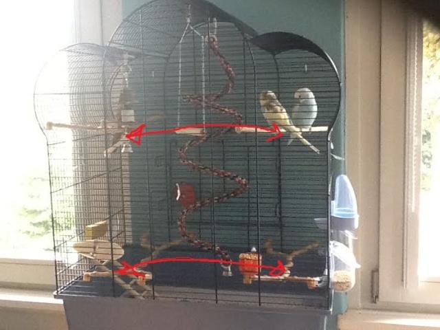 je vous presente la cage de coco et chanel Unname10