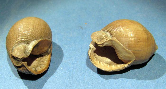 Pliocène des Pyrénnées-Orientales Img_1610