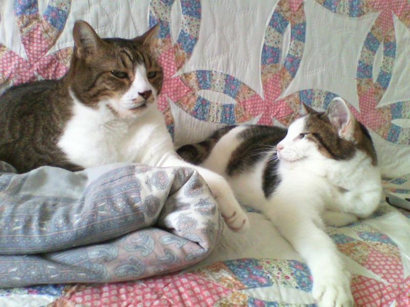 Tigrou et Mysti adopét à l'école de chat libre de Toulouse Img10511