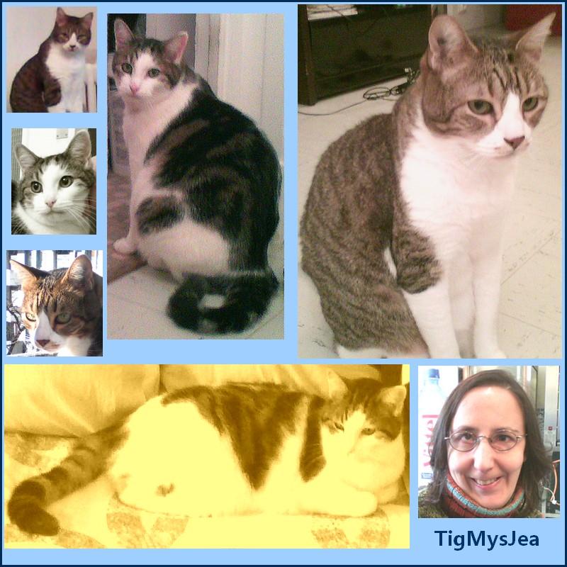 Tigrou et Mysti adopét à l'école de chat libre de Toulouse Tigmys10