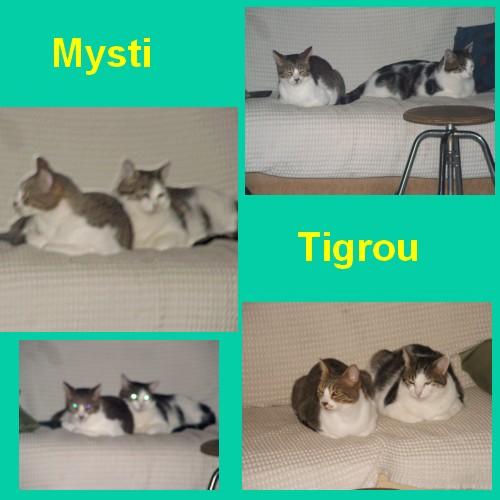 Tigrou et Mysti adopét à l'école de chat libre de Toulouse Tigrou10