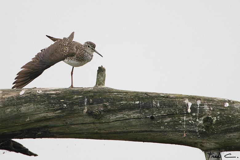 oiseau -Ajonc - 7 octobre trouvé par Martine - Page 2 Cheval10