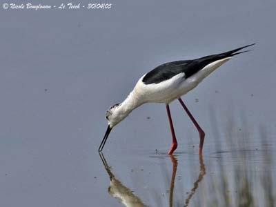 oiseau -Ajonc - 7 octobre trouvé par Martine - Page 2 Echass10