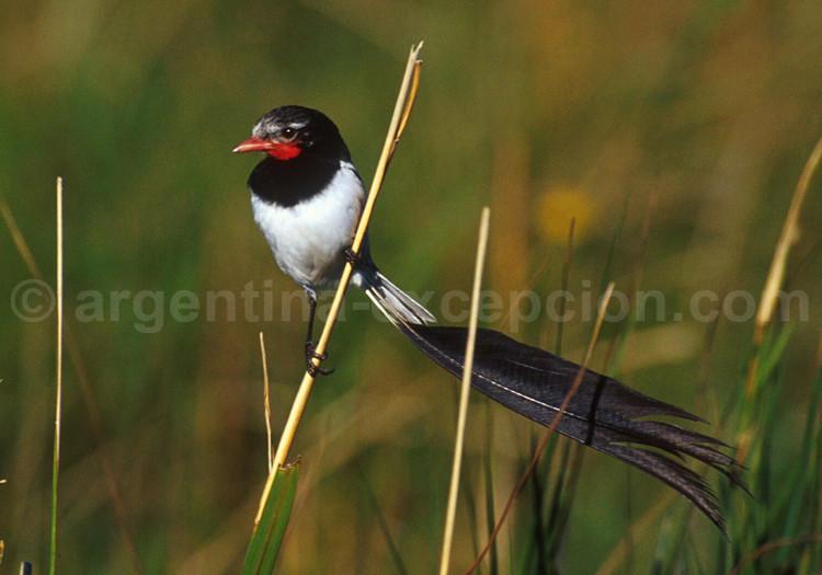 oiseau -Ajonc - 7 octobre trouvé par Martine - Page 2 Mouche10