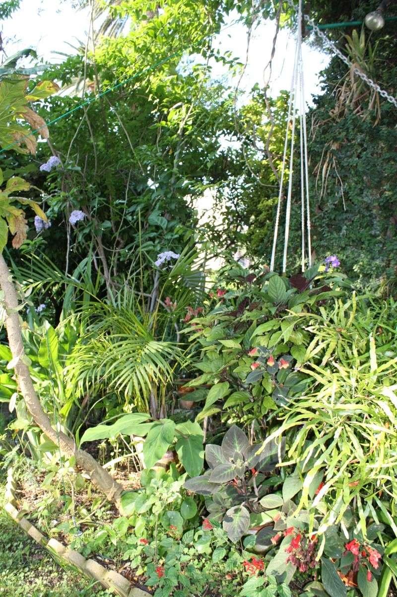 Mon jardin en ce moment : pas mal ! Autour10