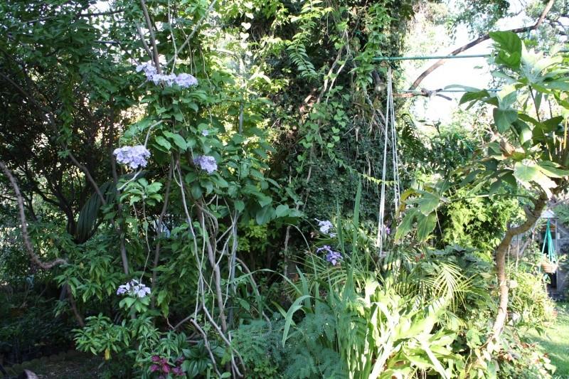 Mon jardin en ce moment : pas mal ! Solanu10
