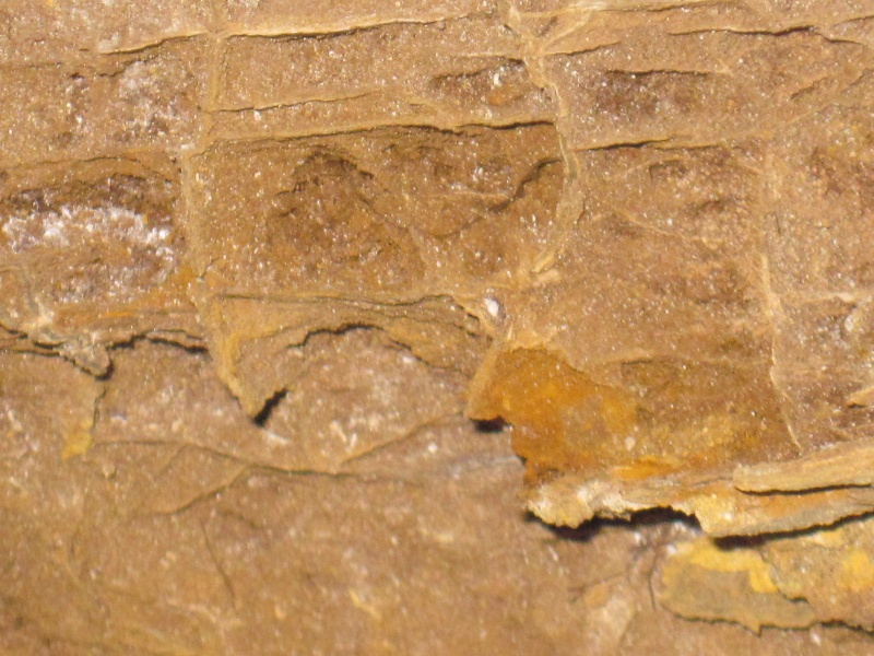 Bois fossile de l'Yprésien Cuise_12